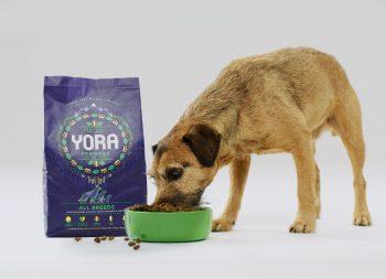 YORA valgantis šuo